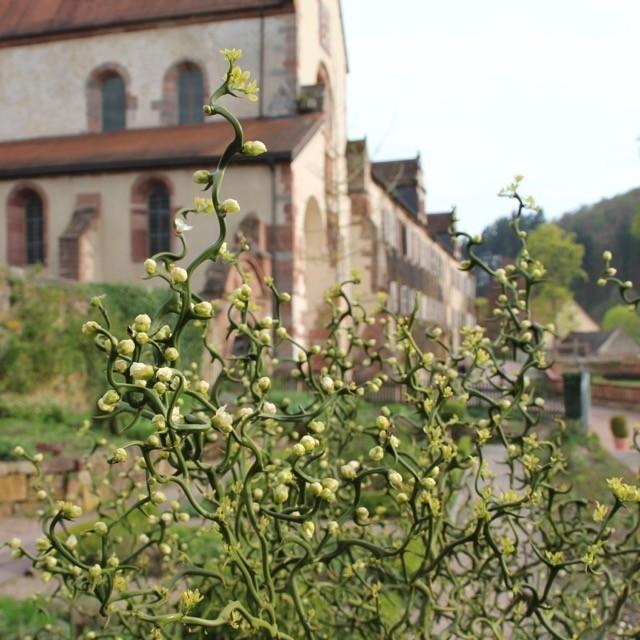 6338Geschichte des Klostergartens