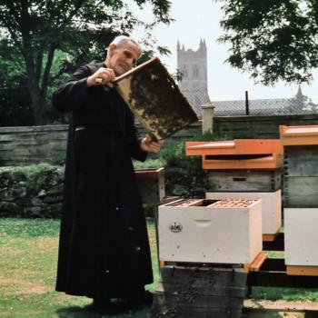 9552Der Mönch hinter den Bienen